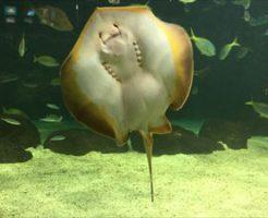 北海道観光 サンピアザ水族館|ワールドネットレンタカー